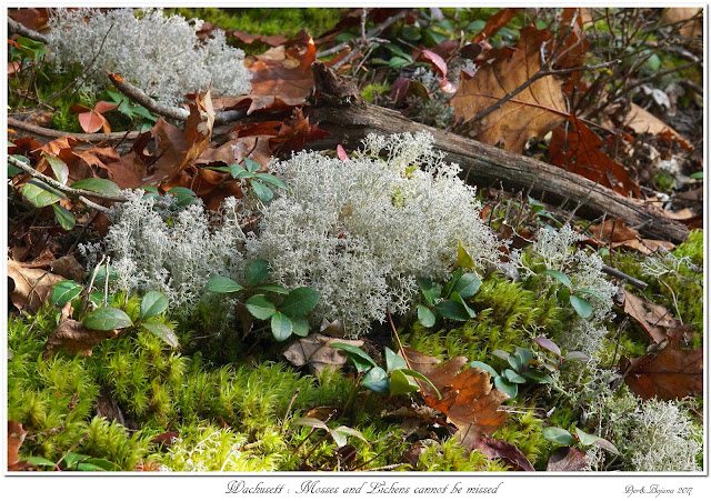 Wachusett: Mosses and Lichens cannot be missed