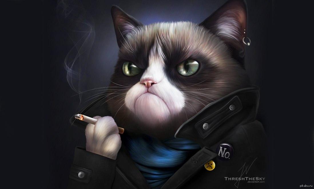 Кот вне себя