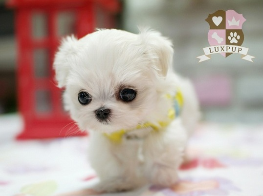 Sweet Baby Girl Wallpaper For Facebook Los Perritos