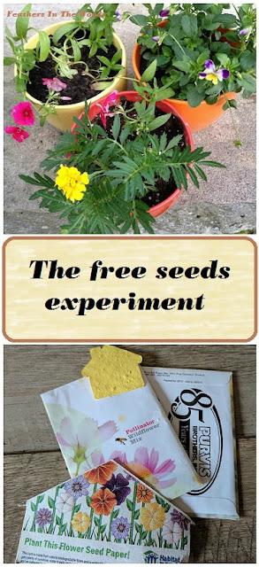 free flower seeds and volunteer plants