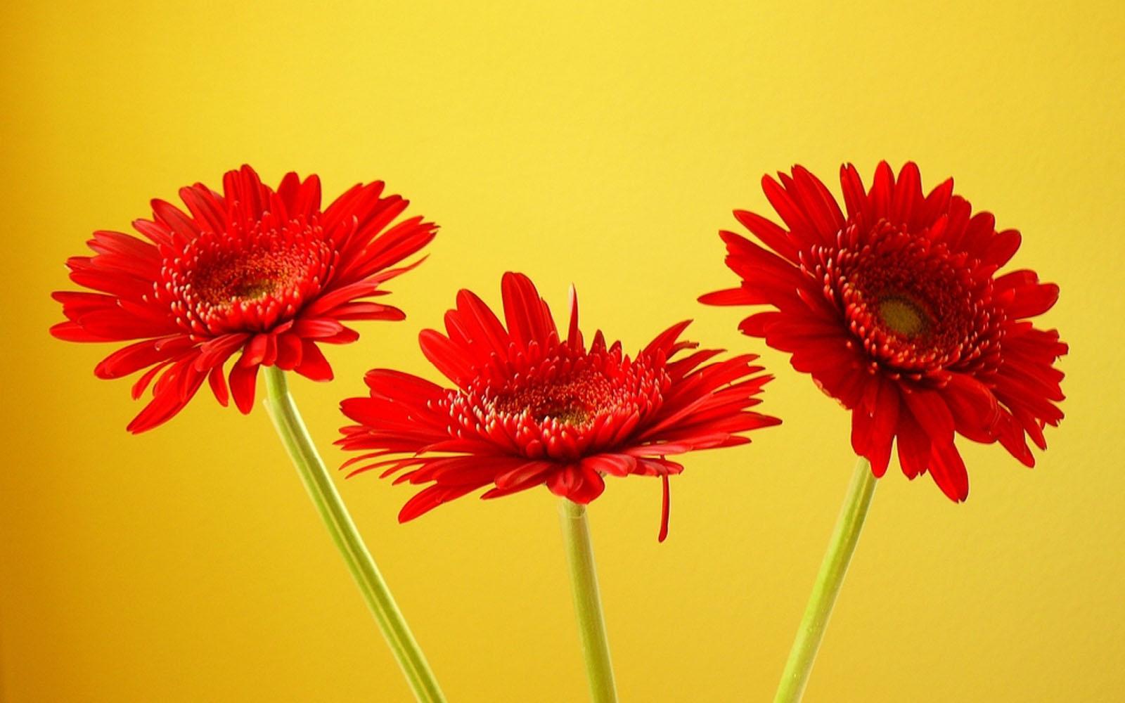 Hd Autumn Desktop Wallpaper Wallpapers Gerbera Flowers Wallpapers