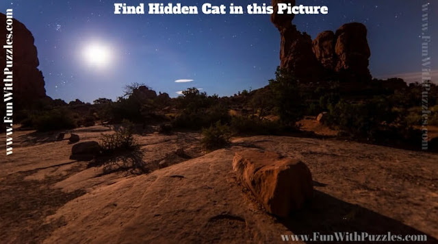 Hidden Animal Picture Puzzle to find hidden Cat