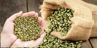 ekstrak kopi hijau