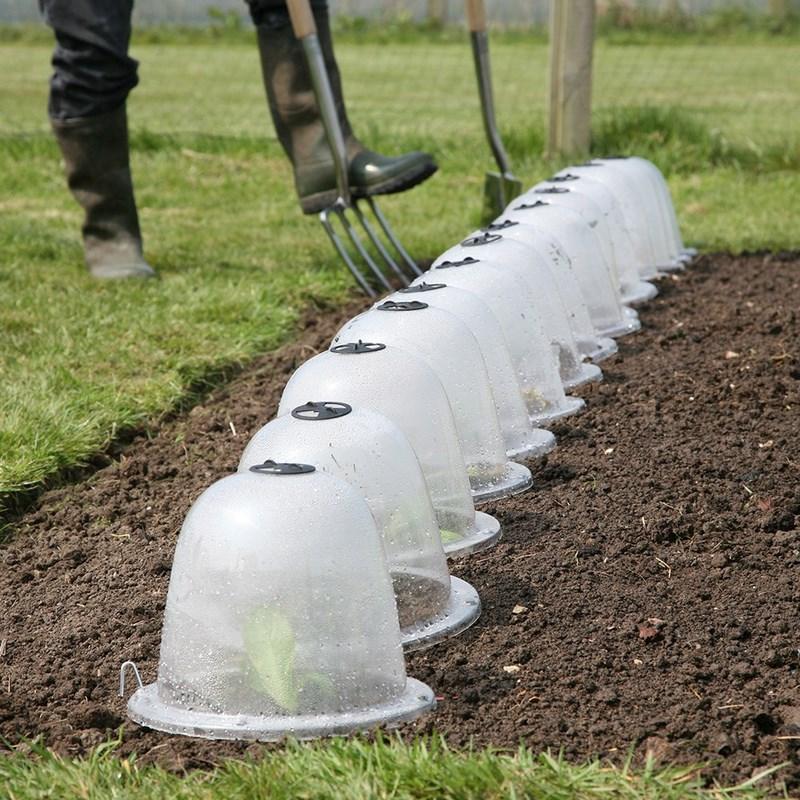 campana de plástico para proteger plantas jóvenes y plántulas en invierno