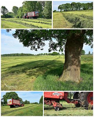 Gras wird im Mai eingefahren