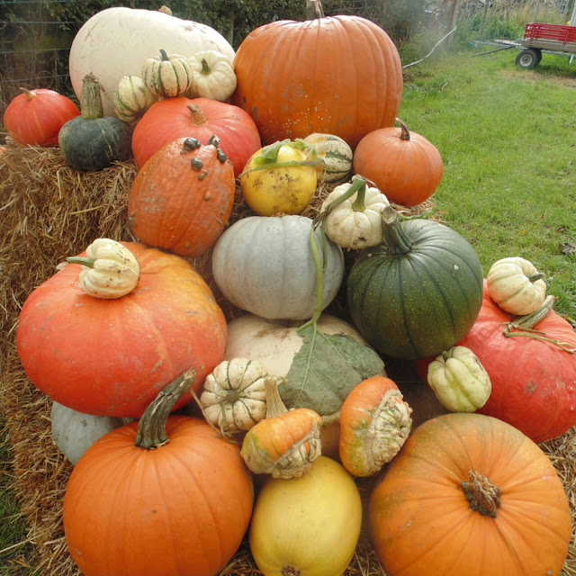 Pumpkin and squash display, green, orange, yellow, blue, white