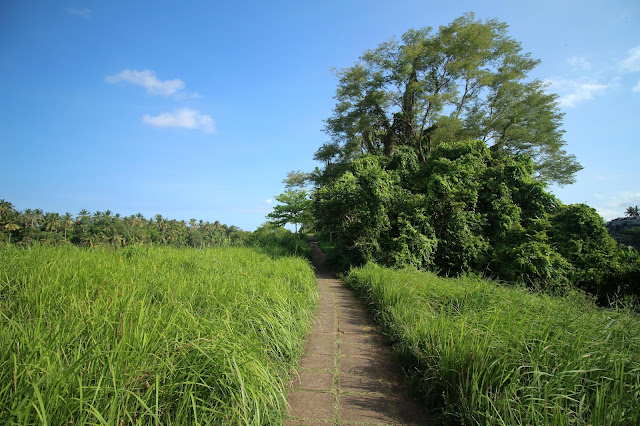 Chemin Campuhan Walk à Ubud