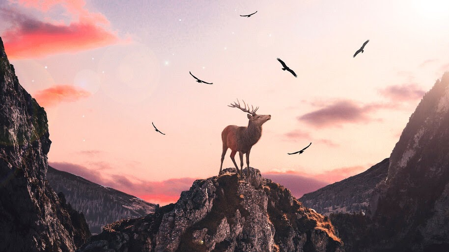Deer, Mountain, Scenery, 4K, #4.567
