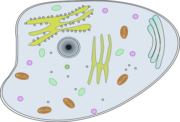 What-is-Cell-Definition-ما-هو-تعريف-الخلية