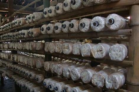 Peluang usaha baru bisnis budidaya jamur tiram - Bisnis Sampingan 007 8cded81b96