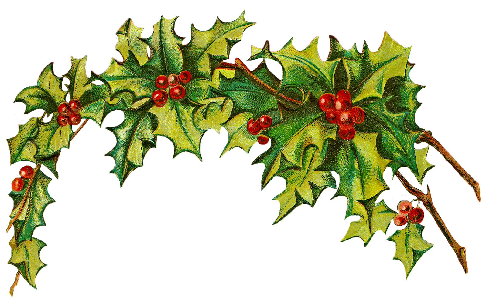 free xmas clipart holly - photo #28