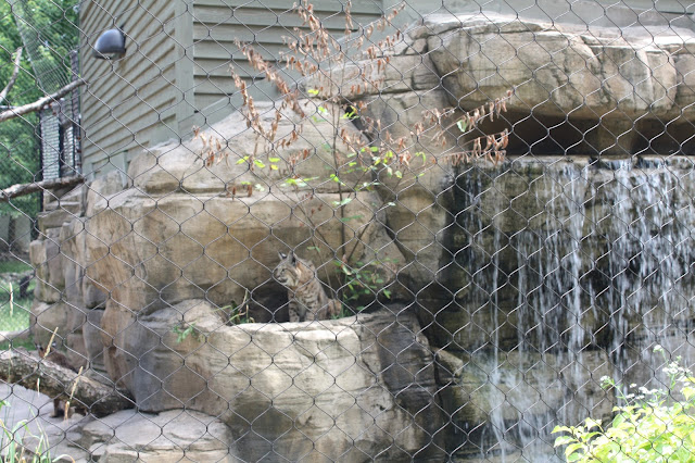 Bobcat enclosure at Cosley Zoo in Wheaton, Illinois
