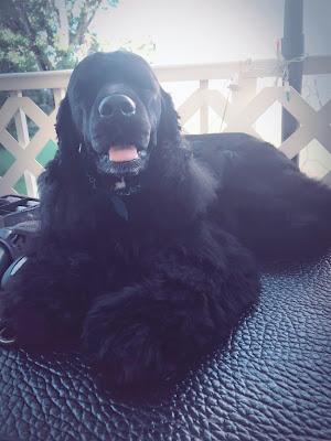 odalys mobile dog grooming miami