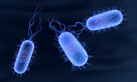la fiebre tifoidea es un virus o una bacteria