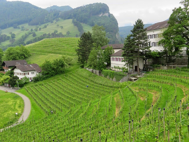A Vineyard in Liechtenstein