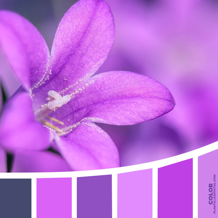 color_481