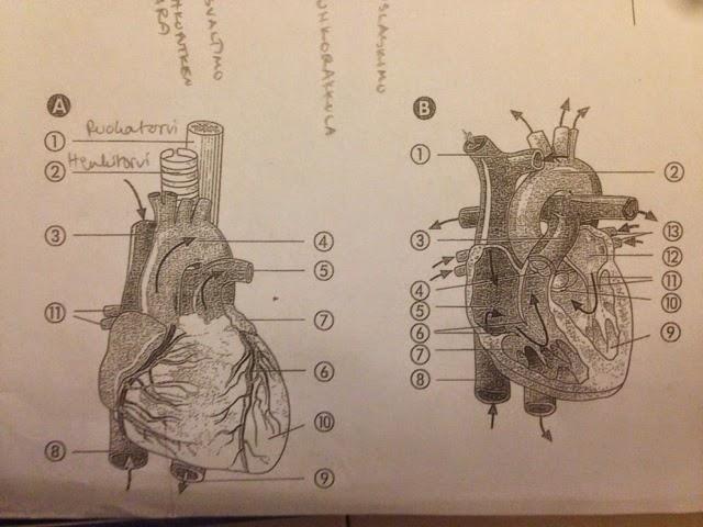 Sydänkorvake