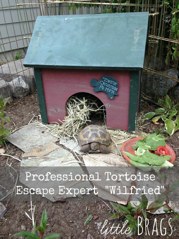 Little Brags: 3 Kittens, A Bunny, A Tortoise Tale & Some ...