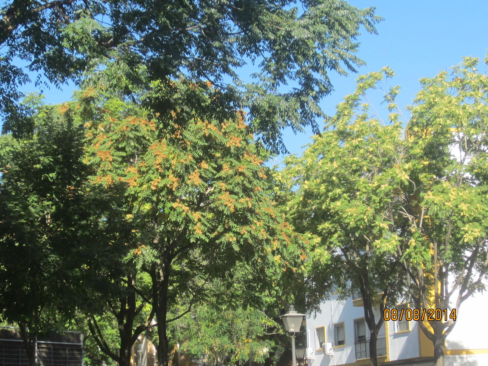 historias en verde los arboles de la ciudad los rboles