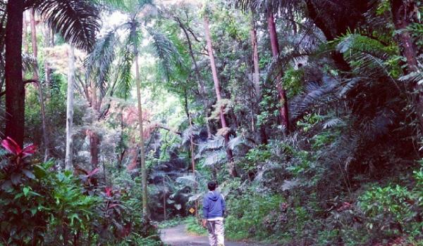 Tiket Masuk dan Lokasi  Wana Wisata Hutan Penggaron Semarang