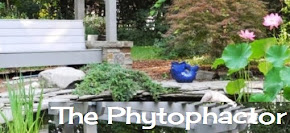 The Phytophactor - BOTANY BLOG