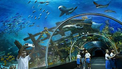 real underwater world. Fine World Inside Real Underwater World
