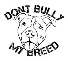 art 3170 civic engagement social issues action project alexandra Gator Pit don t bully my breed