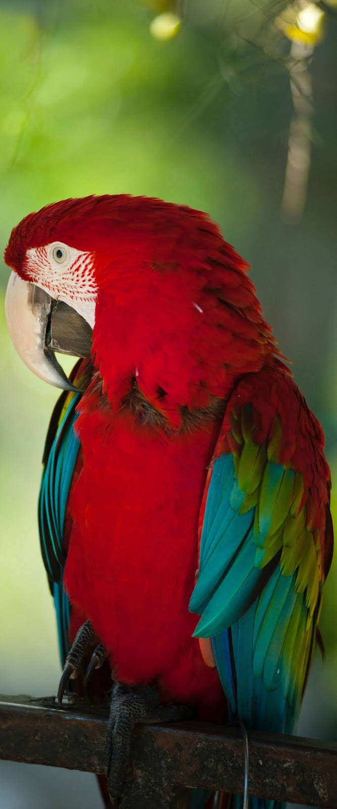 A beautiful colorful macaw photo.