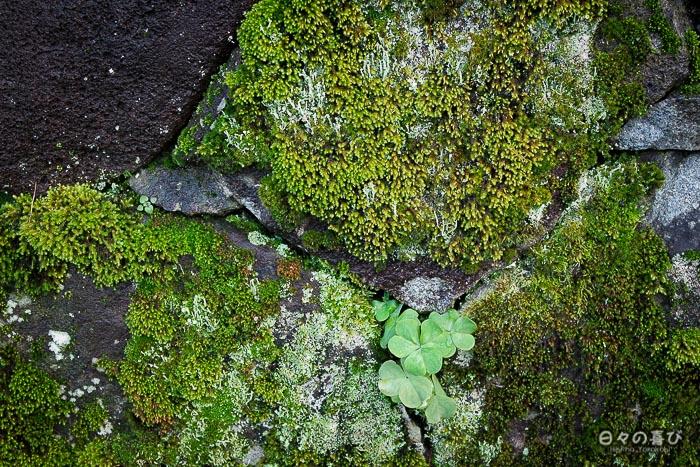 pierres envahies par la mousse
