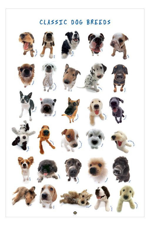 Dog Types Pictures Az