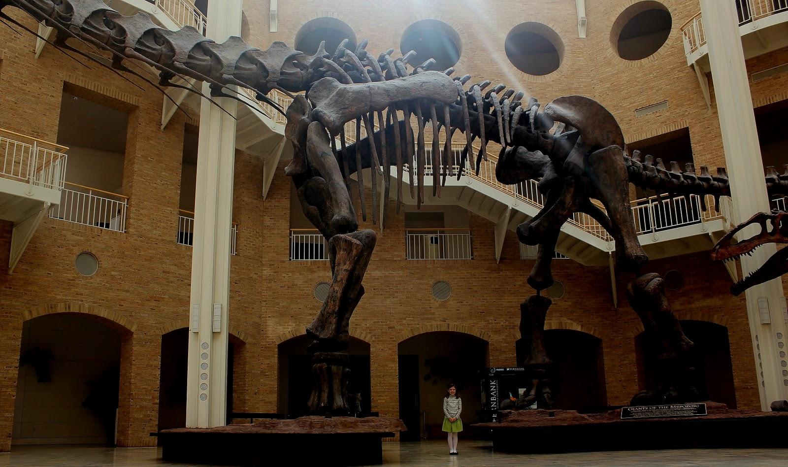 Natural History Museum Birmingham 8