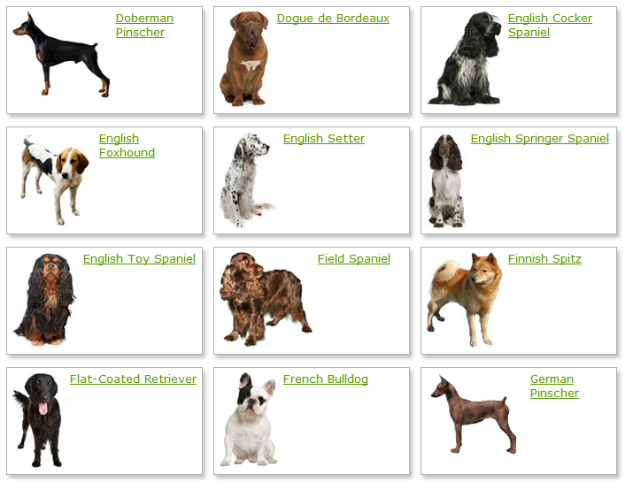 All List Of Different Dogs Breeds: Dog Breeds List With ... - photo#29