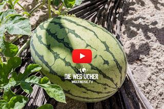 Bio Garten in den Tropen, Sri Lanka, Tangalle, WELTREISE.TV