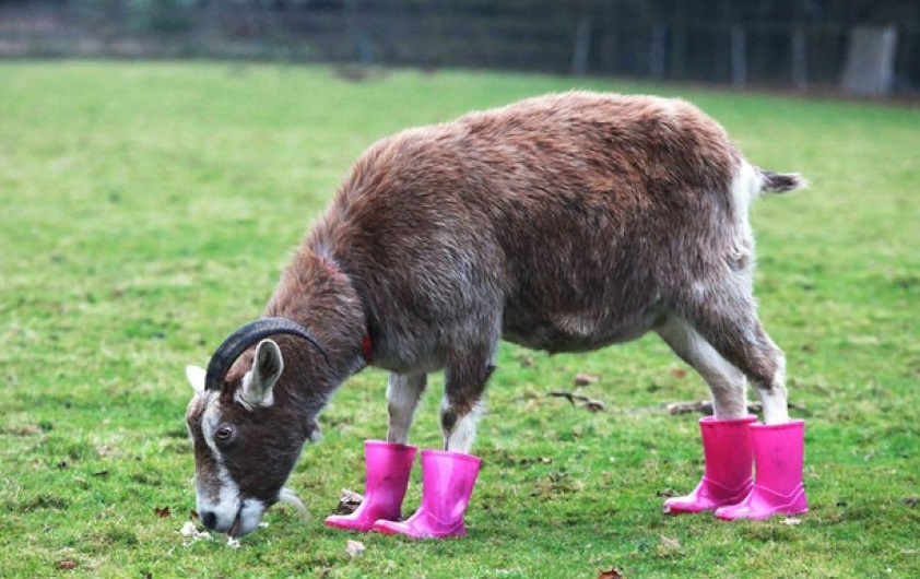 Funny Animals Wearing Shoes