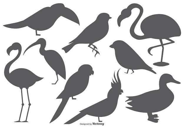 Vector Bird Shape Collection