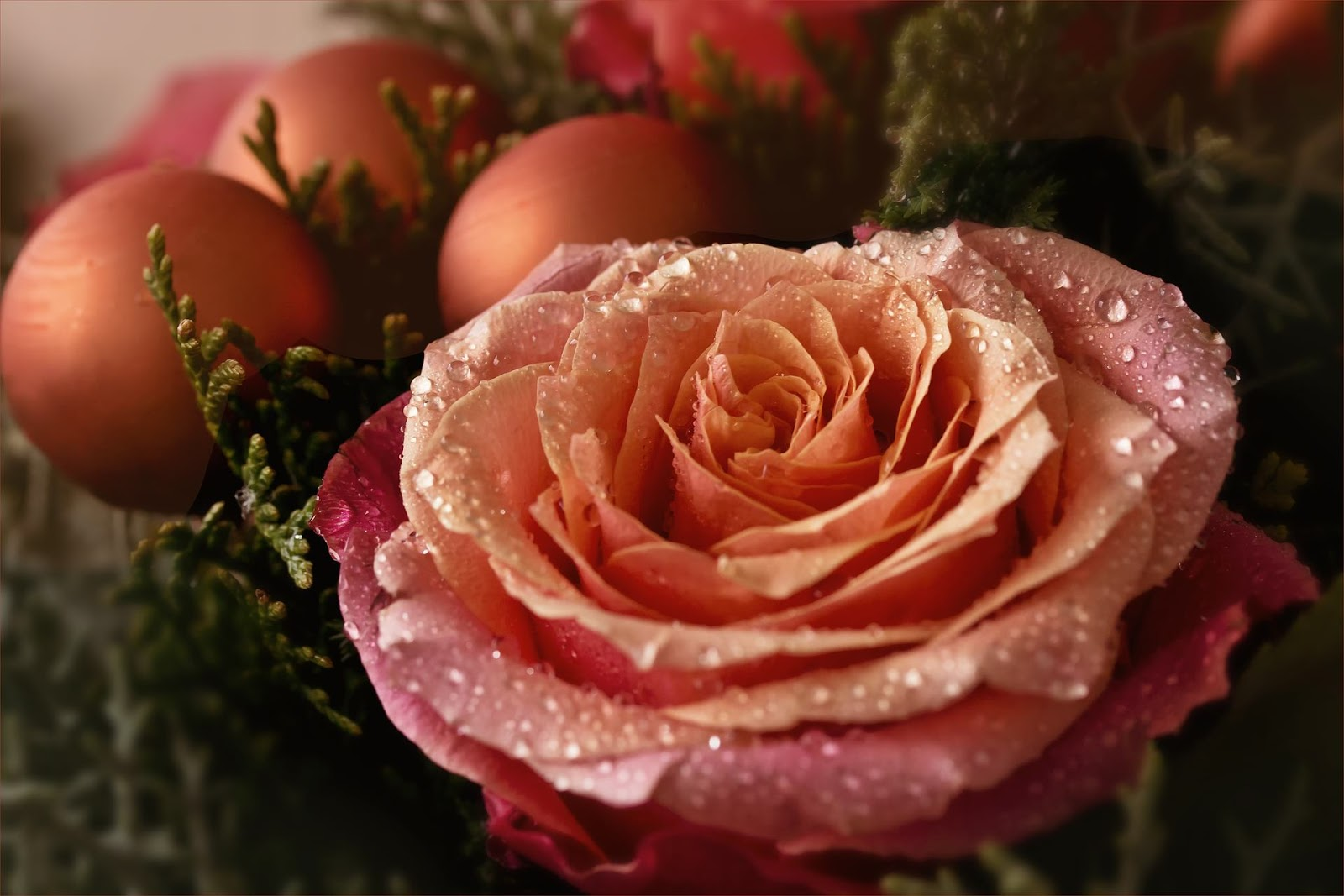 rose-christmas-desktop -wallpaper
