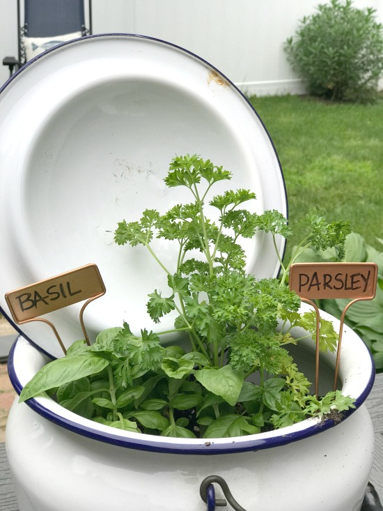 Using an Enamelware pot as an Herb Garden