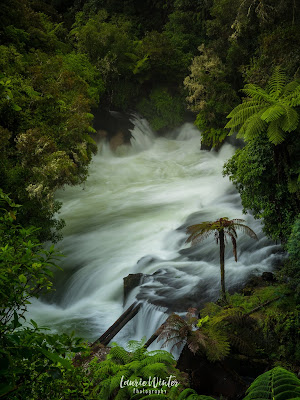 New Zealand, NZ, Rotorua, Okere Falls, Kaituna River