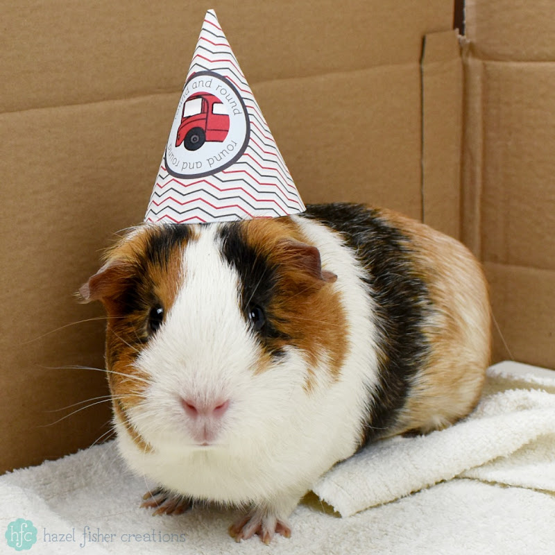 Celebrating my Etsy shop (hfcSupplies) anniversary - guinea pigs modelling printable party hats - Hazel Fisher Creations