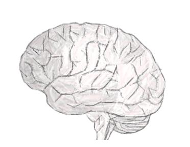 mennesker uden hjerne