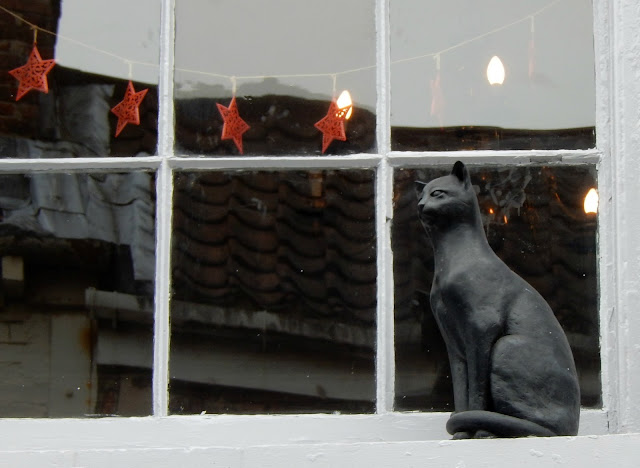 York-Cat-Story