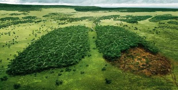 Pengertian dan Unsur Lingkungan Hidup
