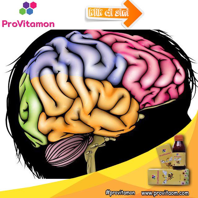 Madu Anak Pintar yang Bagus Untuk Vitamin Otak Anak