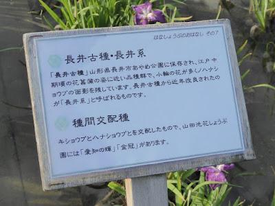 ◆長井古種・長井系 ◆種間交配種