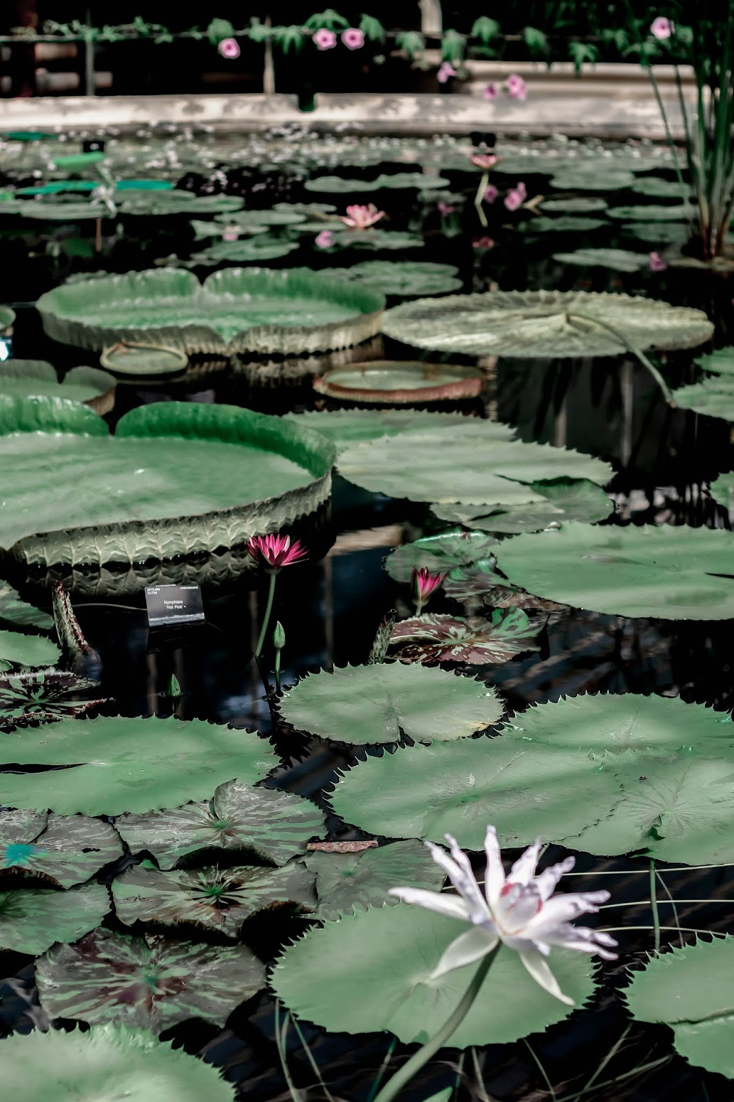 Royal Botanic Gardens Kew Waterlily House