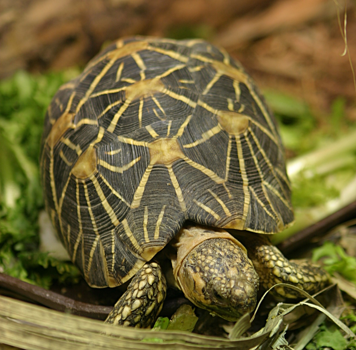 Reptile Research And Conservation Trust Of India: TURTLES