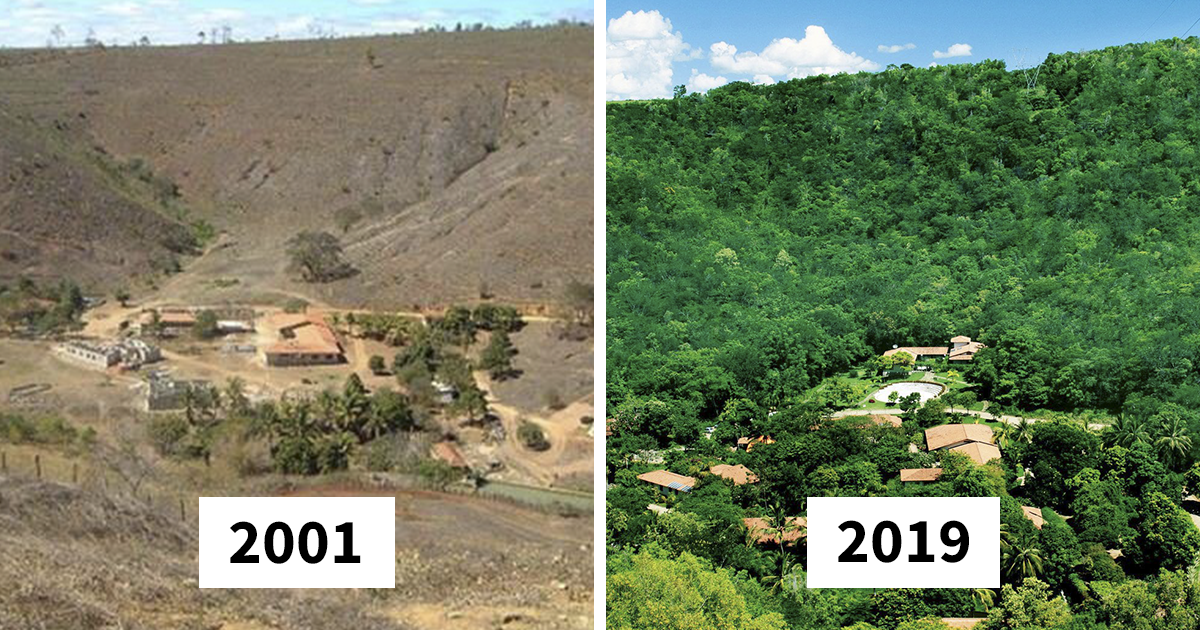 Photographer And His Wife Planted Two Million Trees In 20 Years To Restore A Destroyed Forest
