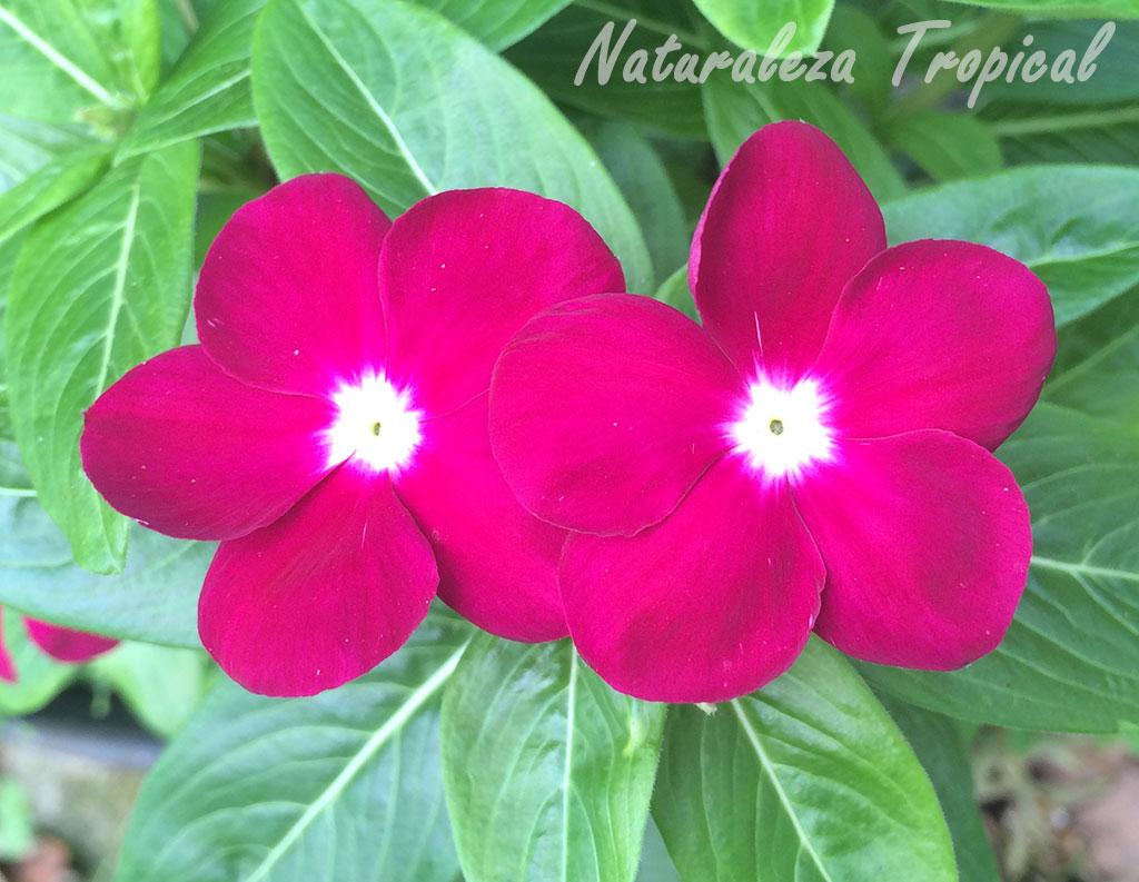 Naturaleza tropical plantas que mantendr n tu jard n - Plantas exteriores todo el ano ...