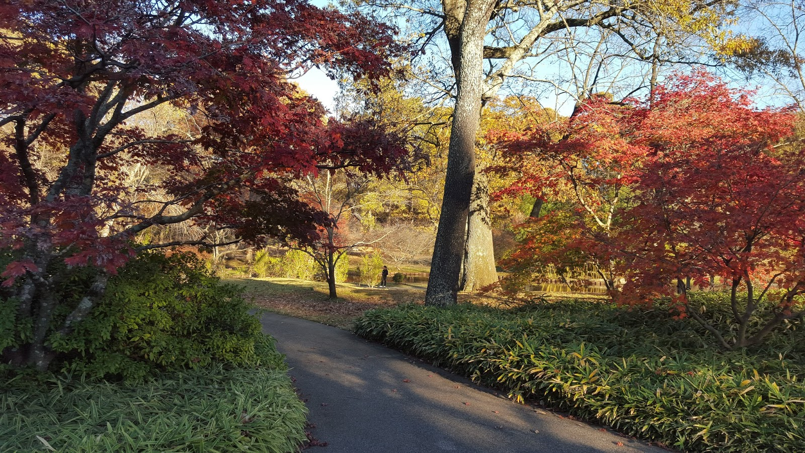 Divers and Sundry: Memphis Botanic Garden in the Fall
