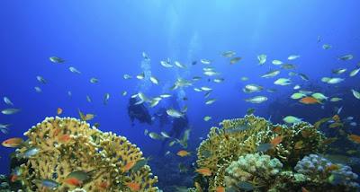 Έρευνες για την καταγραφή των αλιευμάτων στο Βόρειο Ιόνιο